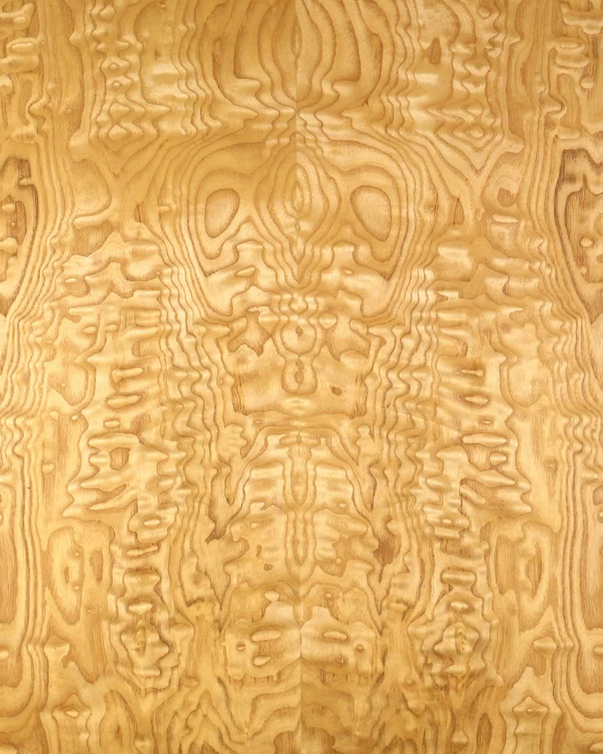 Ambienta architectural solutions wood for Most beautiful wood